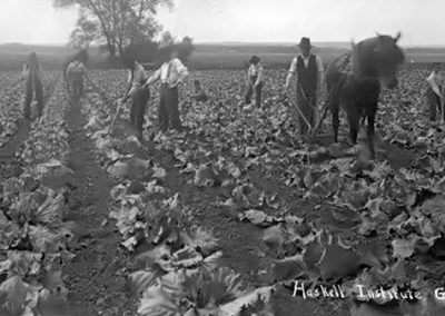 1920 black and white photo of figures working along rows of plants with a horse and plow